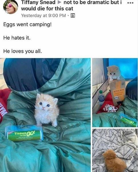 Hamster - Tiffany Snead not to be dramatic but i would die for this cat Yesterday at 9:00 PM Eggs went camping! He hates it. He loves you all. BOTA BON T GO Tissue GO the