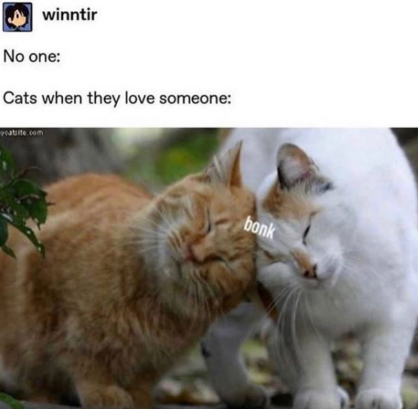 Cat - winntir No one: Cats when they love someone: atite .com bonk