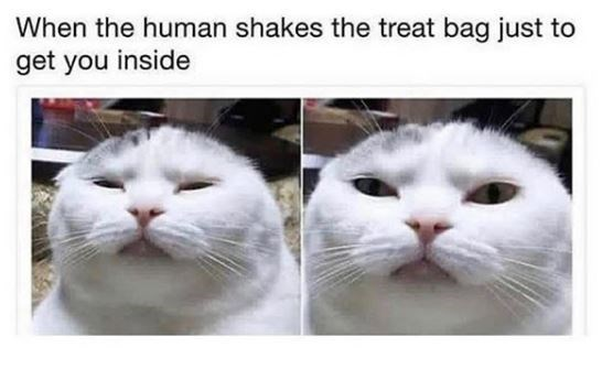 Cat - When the human shakes the treat bag just to get you inside