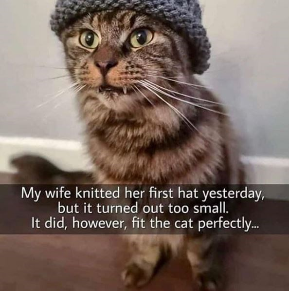 Cat - My wife knitted her first hat yesterday, but it turned out too small. It did, however, fit the cat perfectly.