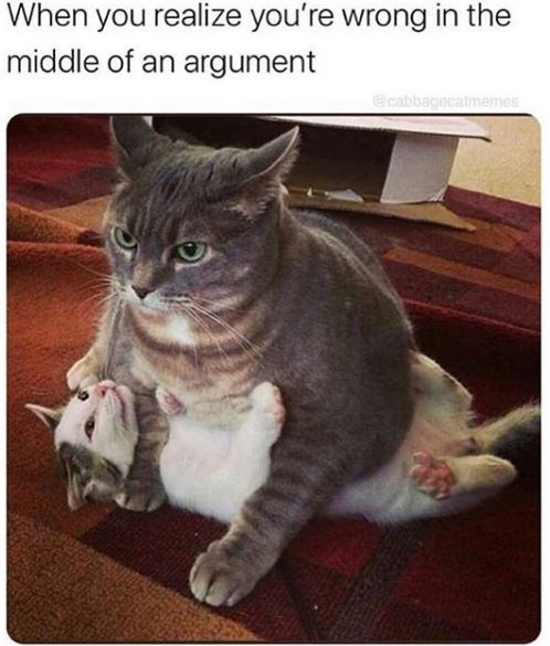Cat - When you realize you're wrong in the middle of an argument @cabbagecalmemes