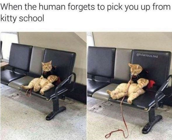 Furniture - When the human forgets to pick you up from kitty school @hilarious.ted