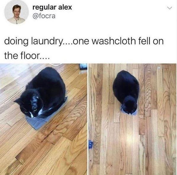 Floor - regular alex @focra doing laundry...one washcloth fell on the floor....