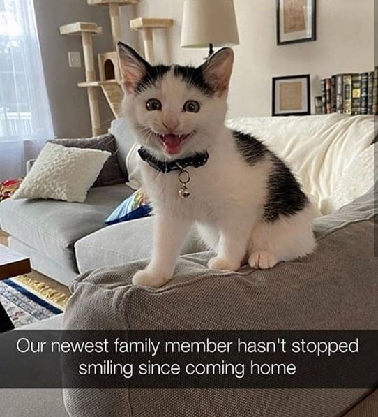 Cat - 口 Our newest family member hasn't stopped smiling since coming home