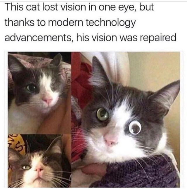 Cat - This cat lost vision in one eye, but thanks to modern technology advancements, his vision was repaired