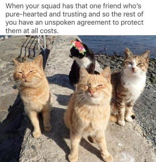 Cat - When your squad has that one friend who's pure-hearted and trusting and so the rest of you have an unspoken agreement to protect them at all costs.