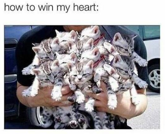 Organism - how to win my heart: