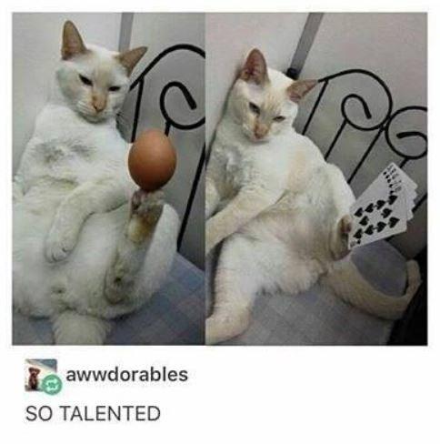 Cat - Ba awwdorables SO TALENTED