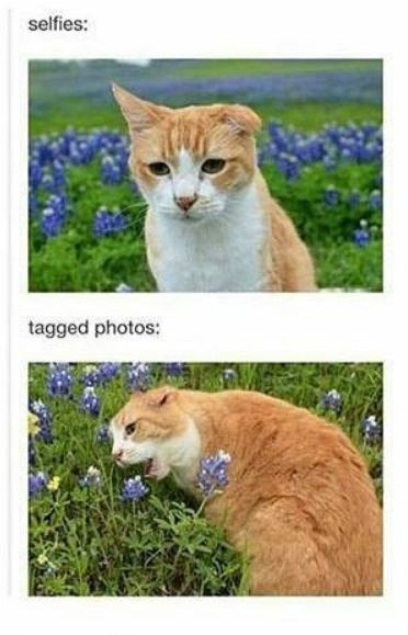Cat - selfies: tagged photos: