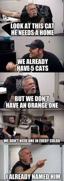 American Chopper argument | LOOK AT THIS CAT HE NEEDS A HOME WE ALREADY HAVE 5 CATS BUT WE DON'T HAVE AN ORANGE ONE WE DON'T NEED ONE IN EVERY COLOR I ALREADY NAMED HIM