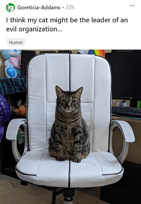 • 22h Goreticia-Addams I think my cat might be the leader of an evil organization... Humor serious looking cat sitting in an office chair