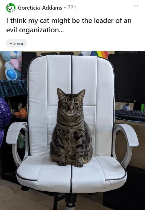 cat memes - 9494424320