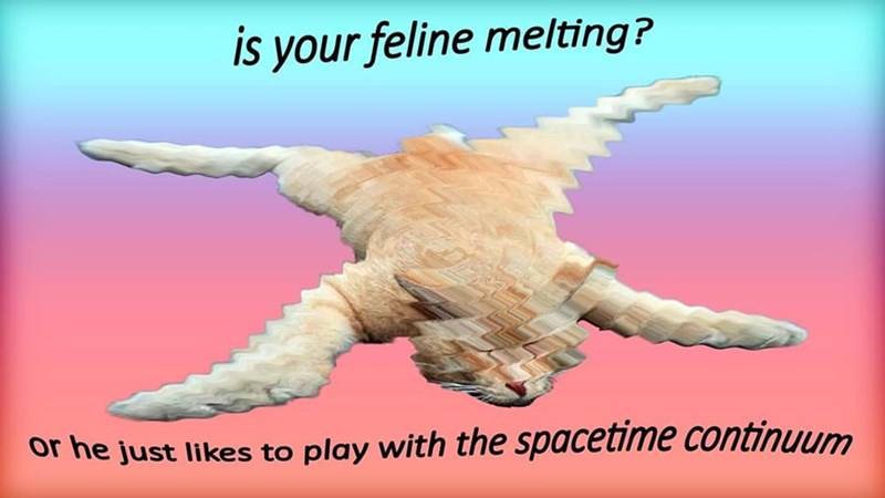 Organism - is your feline melting? or he just likes to play with the spacetime continuum