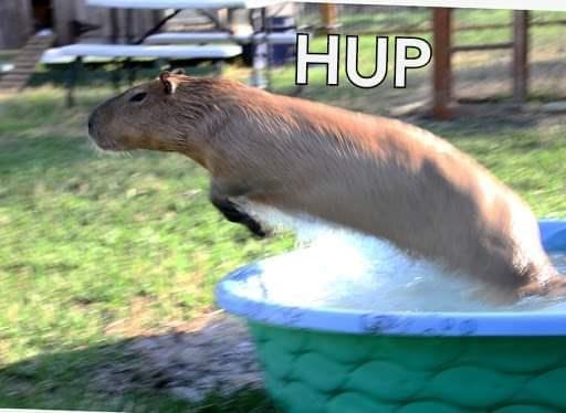 Vertebrate - HUP