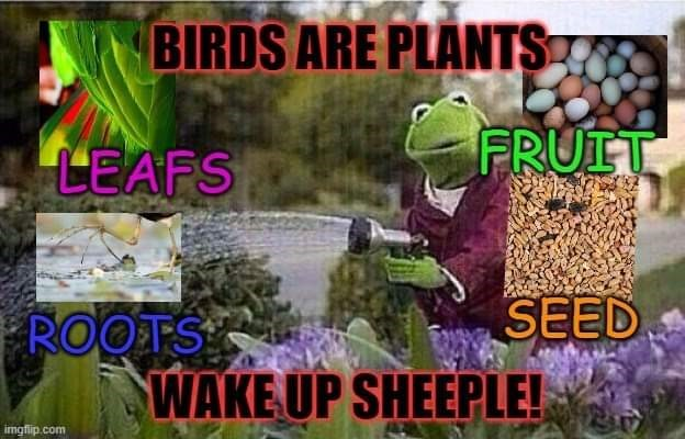 Adaptation - BIRDS ARE PLANTS LEAFS FRUIT SEED ROOTS WAKE UP SHEEPLE! imgfip.com