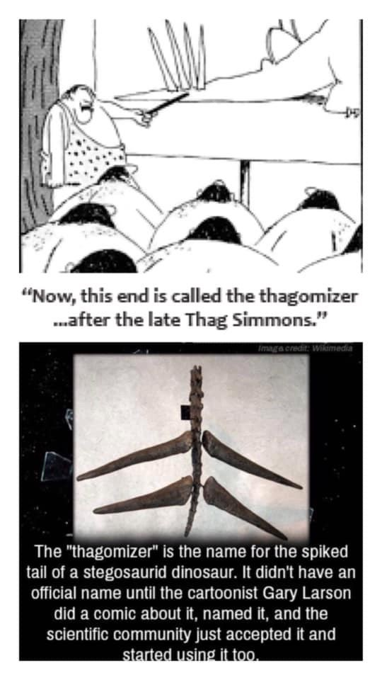 "Text - ""Now, this end is called the thagomizer .after the late Thag Simmons."" Imaga credit: Wikimedia The ""thagomizer"" is the name for the spiked tail of a stegosaurid dinosaur. It didn't have an official name until the cartoonist Gary Larson did a comic about it, named it, and the scientific community just accepted it and started using it too."