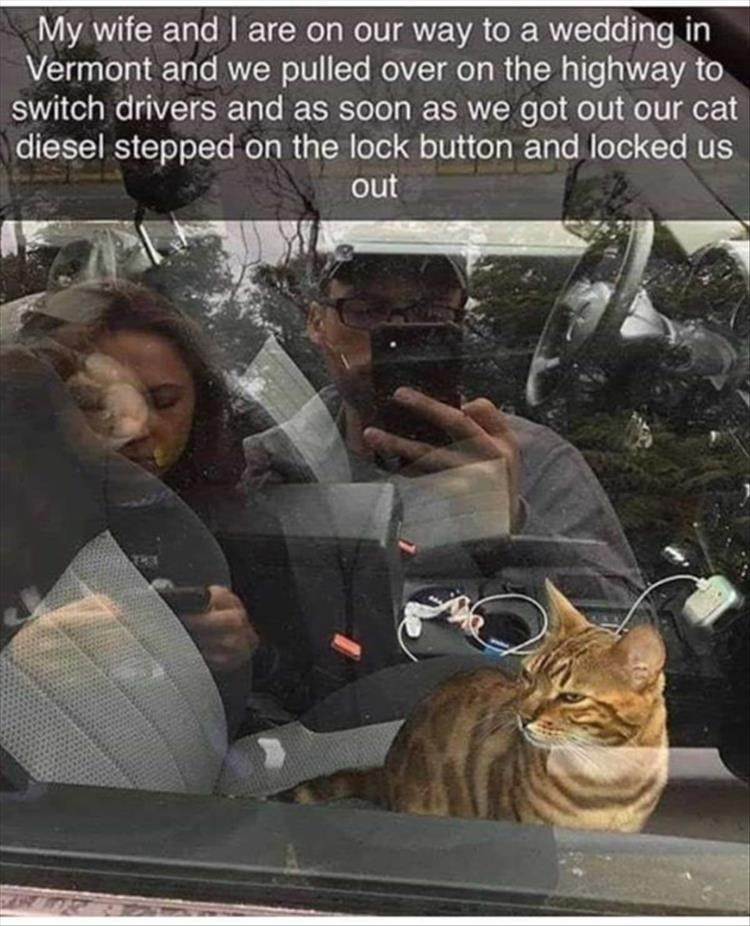 My wife and I are on our way to a wedding in Vermont and we pulled over on the highway to switch drivers and as soon as we got out our cat diesel stepped on the lock button and locked us out