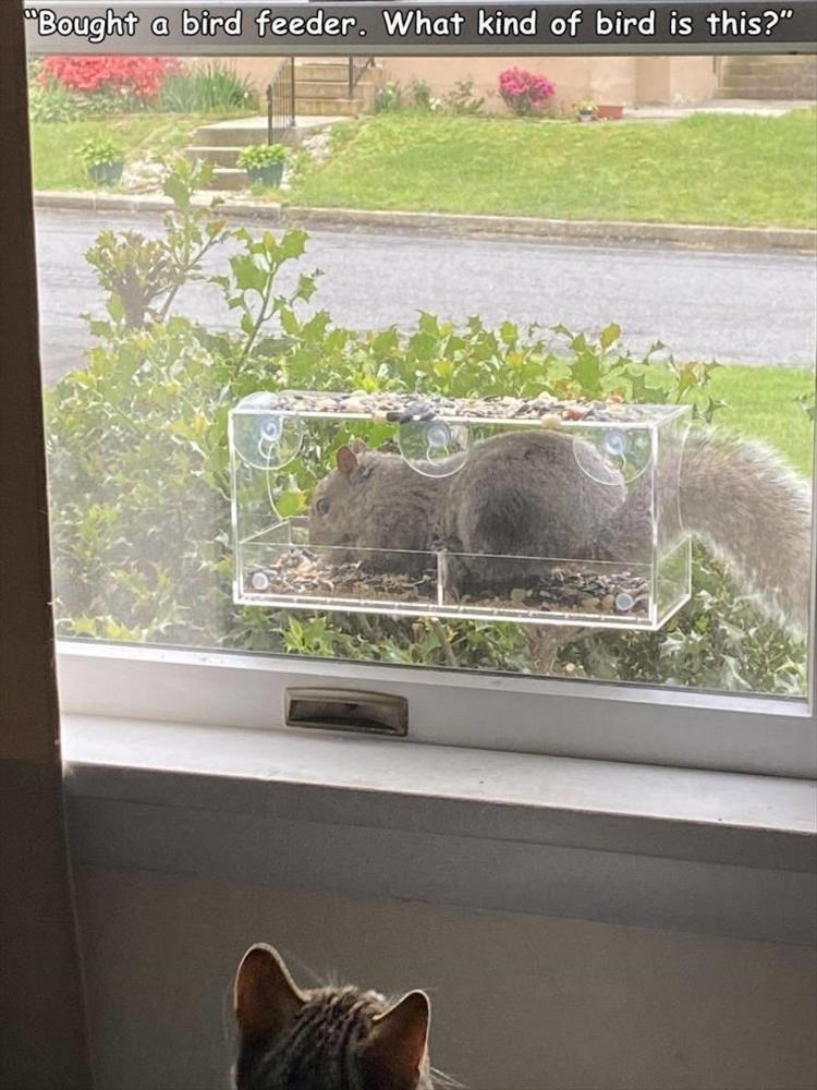 """Bought bird feeder. What kind of bird is this?"" squirrel eating inside a transparent box"