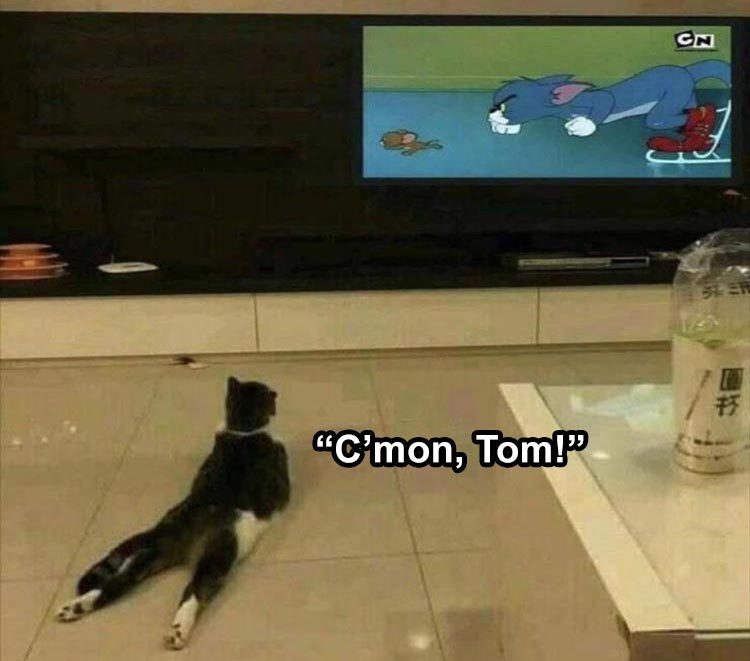 cat watching tom and jerry cartoon on tv and cheering c'mon tom