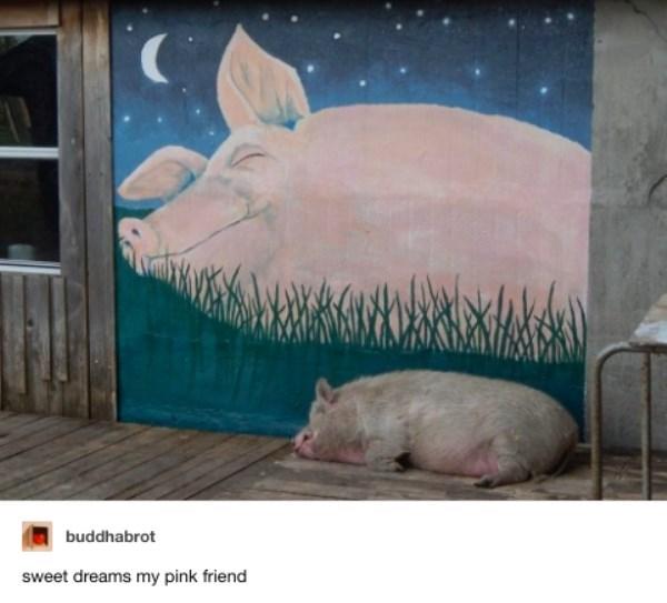 Domestic pig - buddhabrot sweet dreams my pink friend