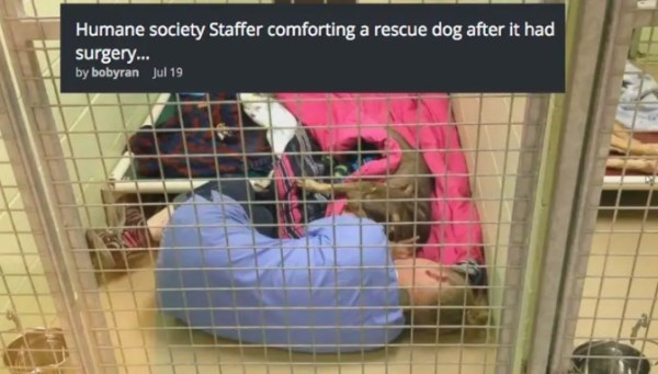 Product - Humane society Staffer comforting a rescue dog after it had surgery. by bobyran Jul 19