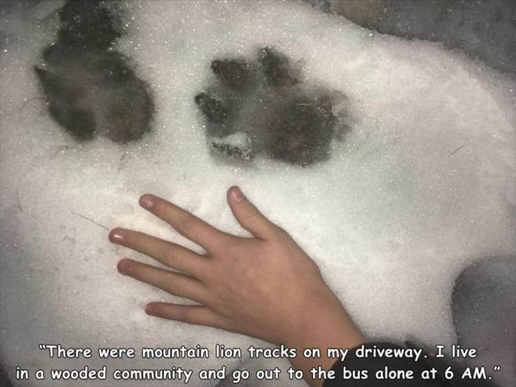 "Skin - ""There were mountain lion tracks on my driveway. I live in a wooded community and go out to the bus alone at 6 AM."""