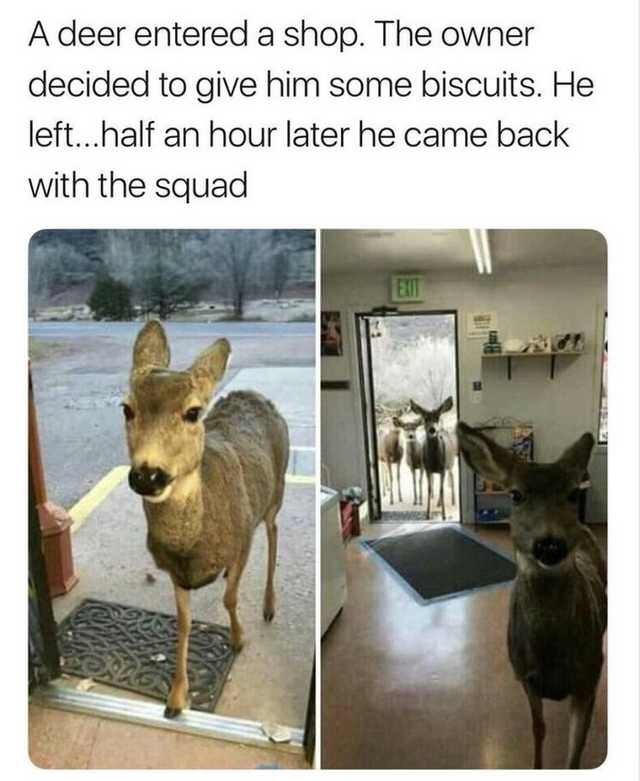 Deer - A deer entered a shop. The owner decided to give him some biscuits. He left...half an hour later he came back with the squad