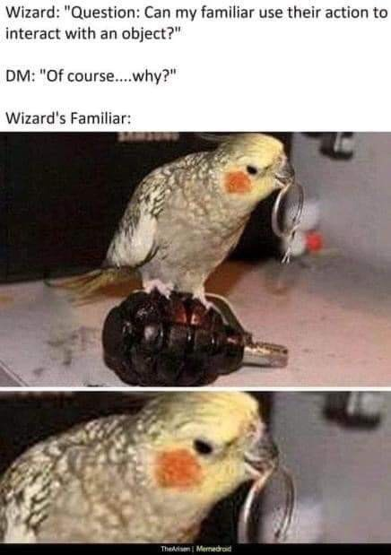 "Bird - Wizard: ""Question: Can my familiar use their action to interact with an object?"" DM: ""Of cours...why?"" Wizard's Familiar: TheArisemi Merredraid"