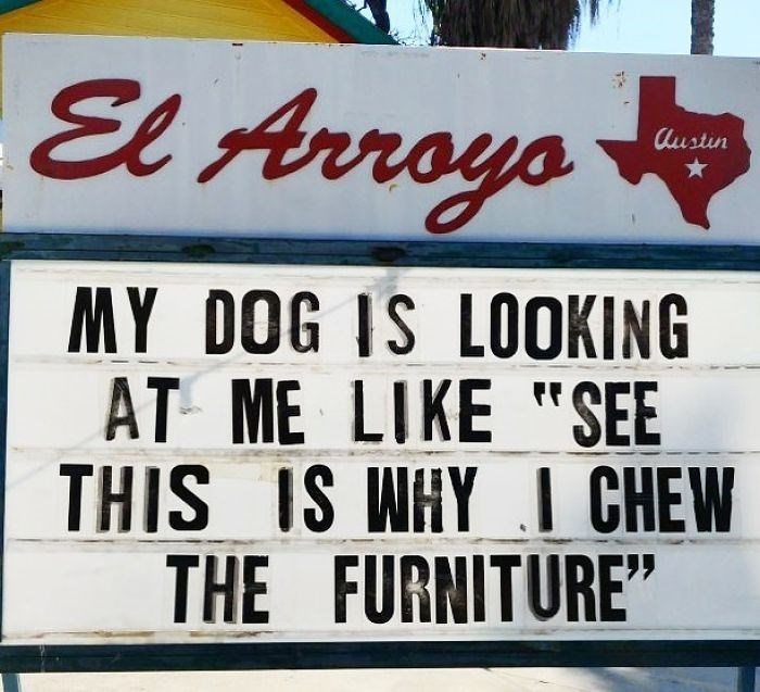 "Font - El Arroys Austin MY DOG IS LOOKING AT ME LIKE ""SEE THIS IS WHY I CHEW FURNITURE"" THE"