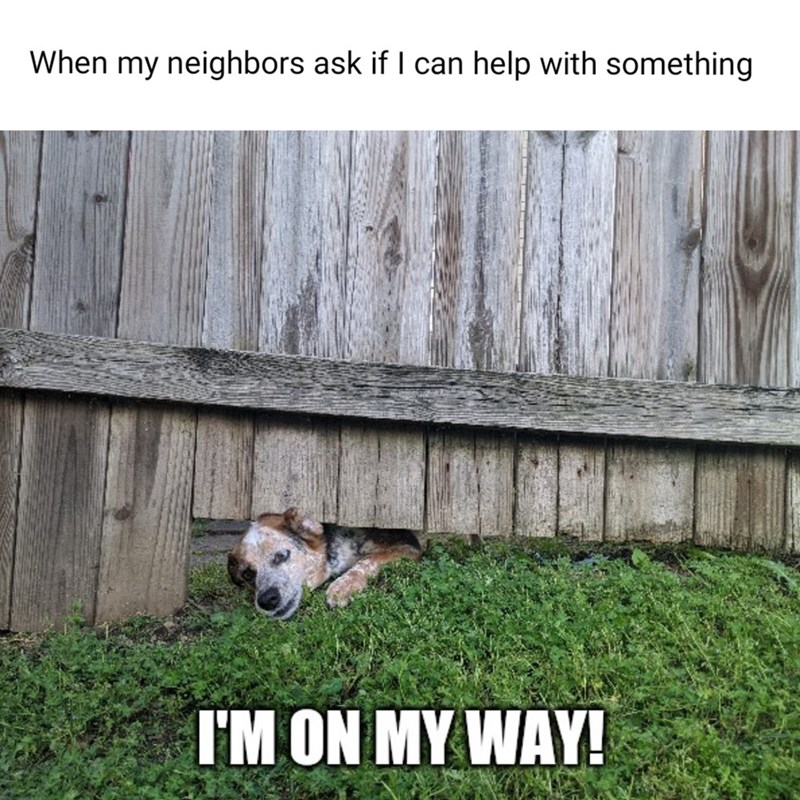 Grass - When my neighbors ask if I can help with something I'M ON MY WAY!