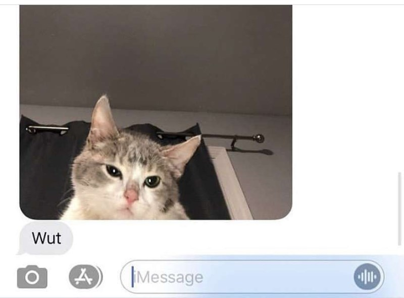 Cat - Wut Message