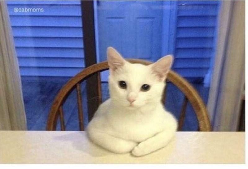 Cat - @dabmoms
