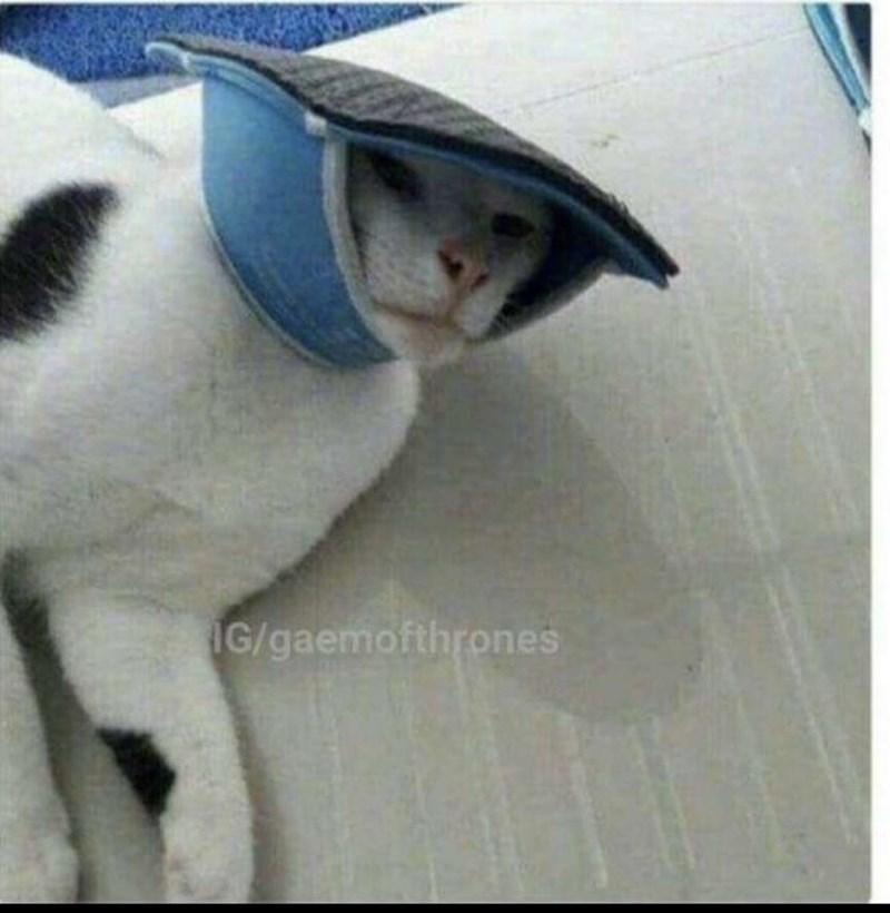 Cat - G/gaemofthrones