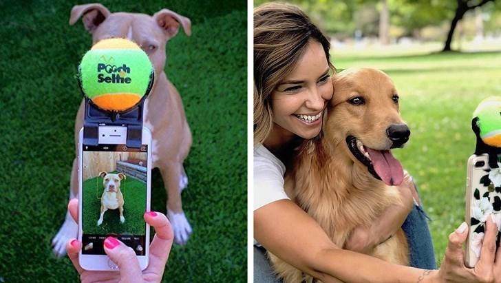 Dog breed - PGorh Selhe
