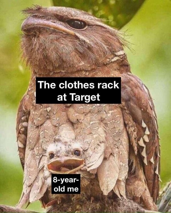 animal meme showing a cute young owl nestled between a larger owl and comparing it to playing hide n seek at a clothing store
