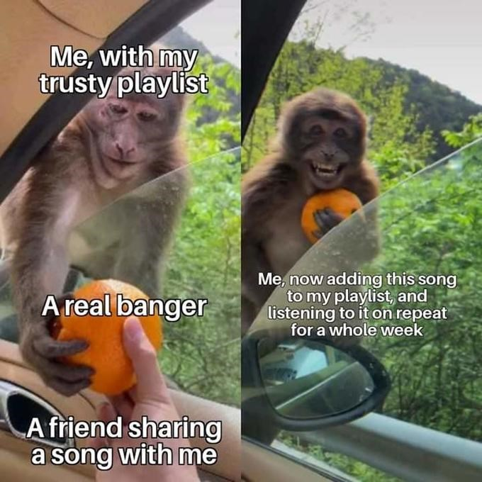 Cute monkey accepting an orange from a person inside a car wholesome meme about adding a song that a friend shared with me to my trusty playlist and listening to it on repeat for a whole week