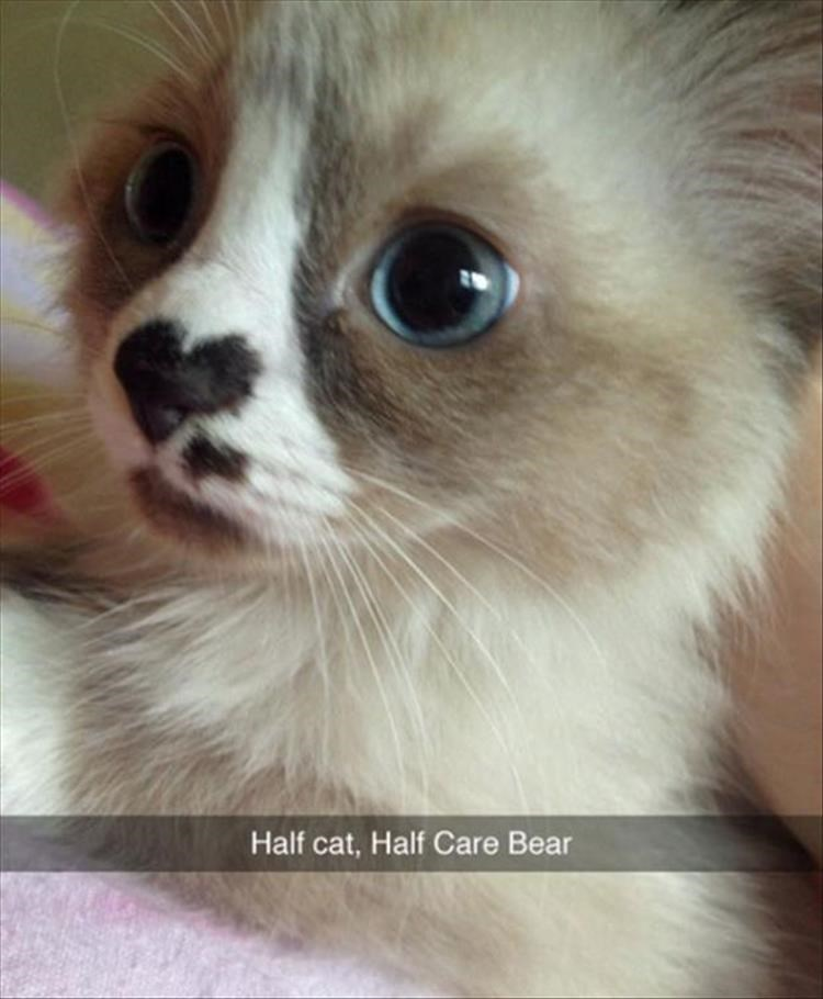 snapshot photo of a cute adorable cat with big blue eyes and a heart shaped nose Half cat, Half Care Bear