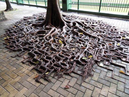 Root - 一月