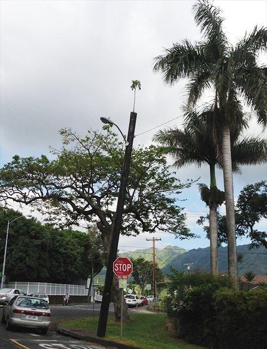 Tree - STOP EXE-WAY