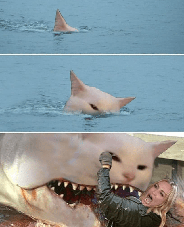 funny woman yelling at cat shark meme attacking the woman in water
