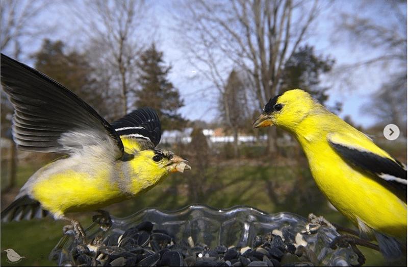 Bird - <>