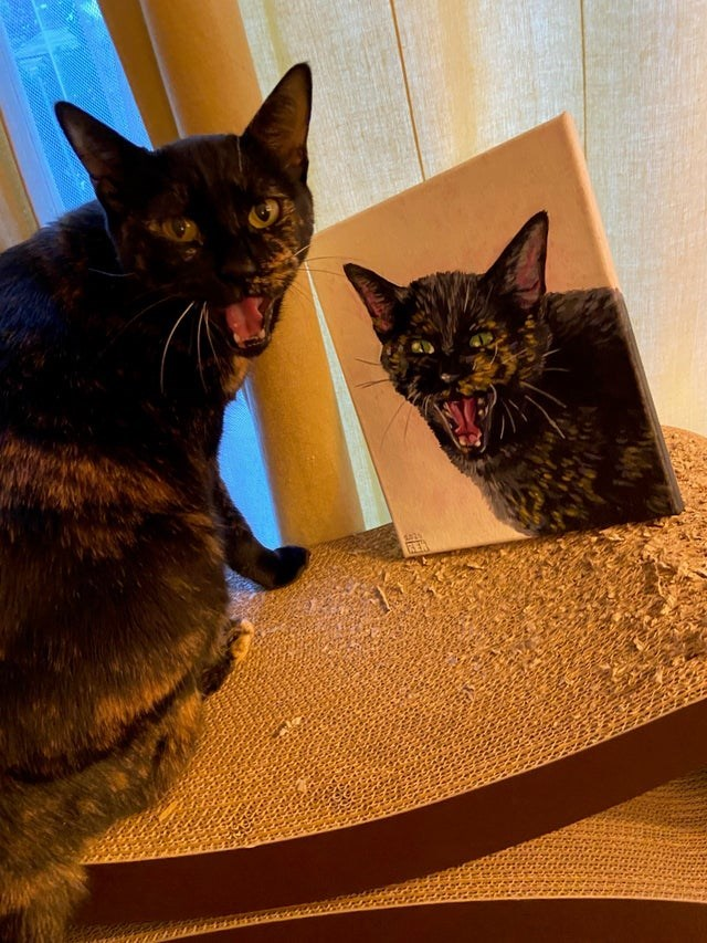 Cat - REN