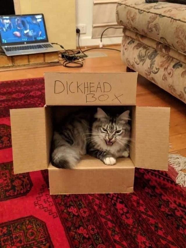 Cat - DICKHEAD BOX