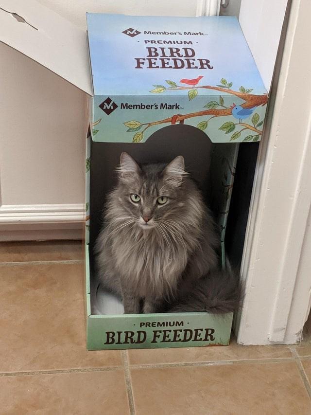Cat - Member's Mark PREM IUM - BIRD FEEDER M Member's Mark PREMIUM- BIRD FEEDER