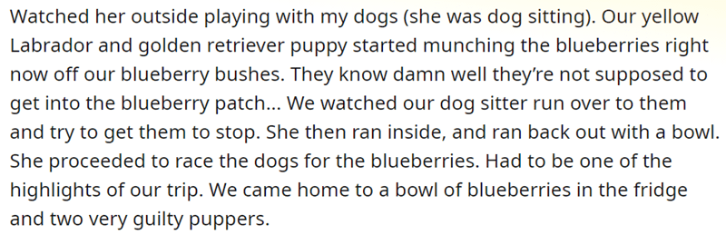 Text - Watched her outside playing with my dogs (she was dog sitting). Our yellow Labrador and golden retriever puppy started munching the blueberries right now off our blueberry bushes. They know damn well they're not supposed to get into the blueberry patch... We watched our dog sitter run over to them and try to get them to stop. She then ran inside, and ran back out with a bowl. She proceeded to race the dogs for the blueberries. Had to be one of the highlights of our trip. We came home to a