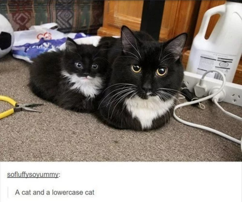 Cat - sofluffysoyummy: A cat and a lowercase cat