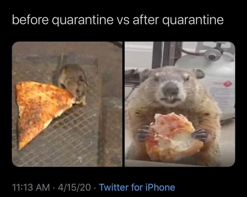 Organism - before quarantine vs after quarantine 11:13 AM · 4/15/20 · Twitter for iPhone