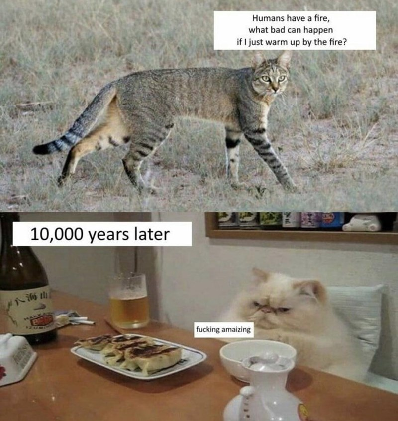 Humans have a fire, what bad can happen if I just warm up by the fire? 10,000 years later fucking amazing wild cat vs fluffy house cat