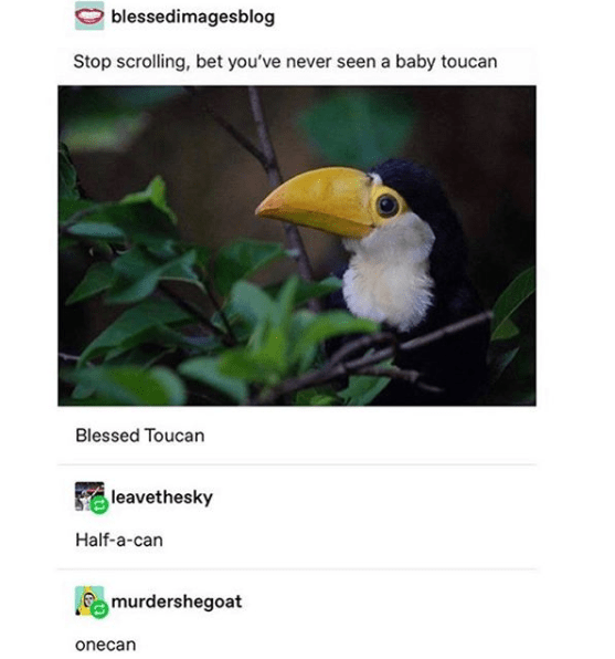 adorable animal meme with a baby toucan and making fun of its name
