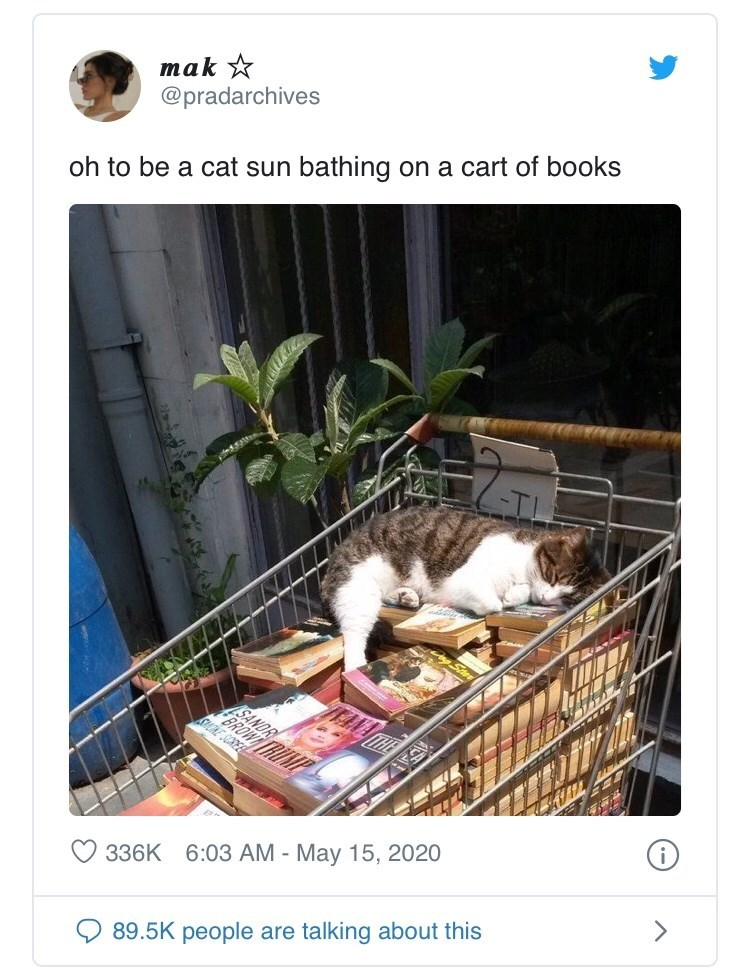 Cat - mak * @pradarchives oh to be a cat sun bathing on a cart of books SANDR BROWT TRUMP KE SCREE > 336K 6:03 AM - May 15, 2020 89.5K people are talking about this